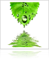 Green Leat with Water Dripping